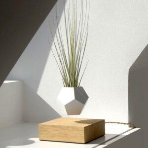 plante levitation