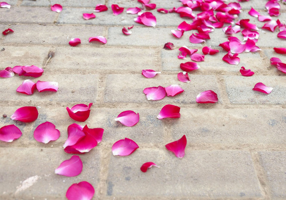 petales roses mariage