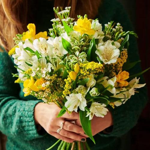 bloom-wild-annuel