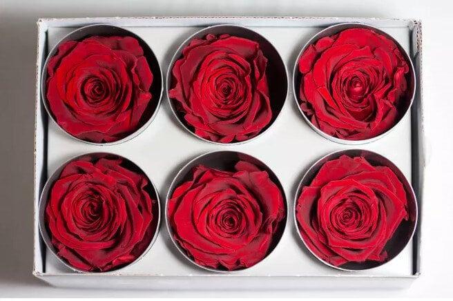 france fleurs roses eternelles