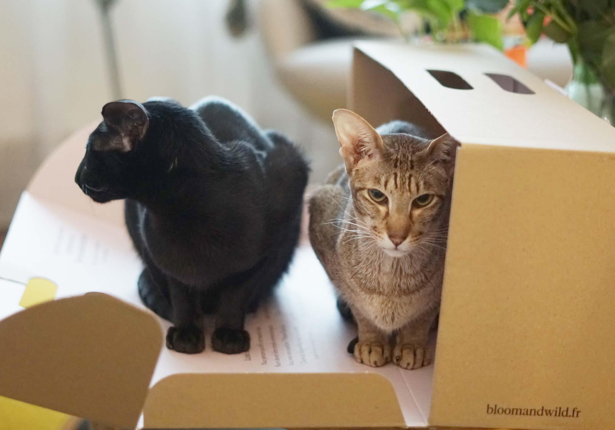 chats box fleurs